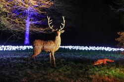 Christmas @ Stourhead 2020
