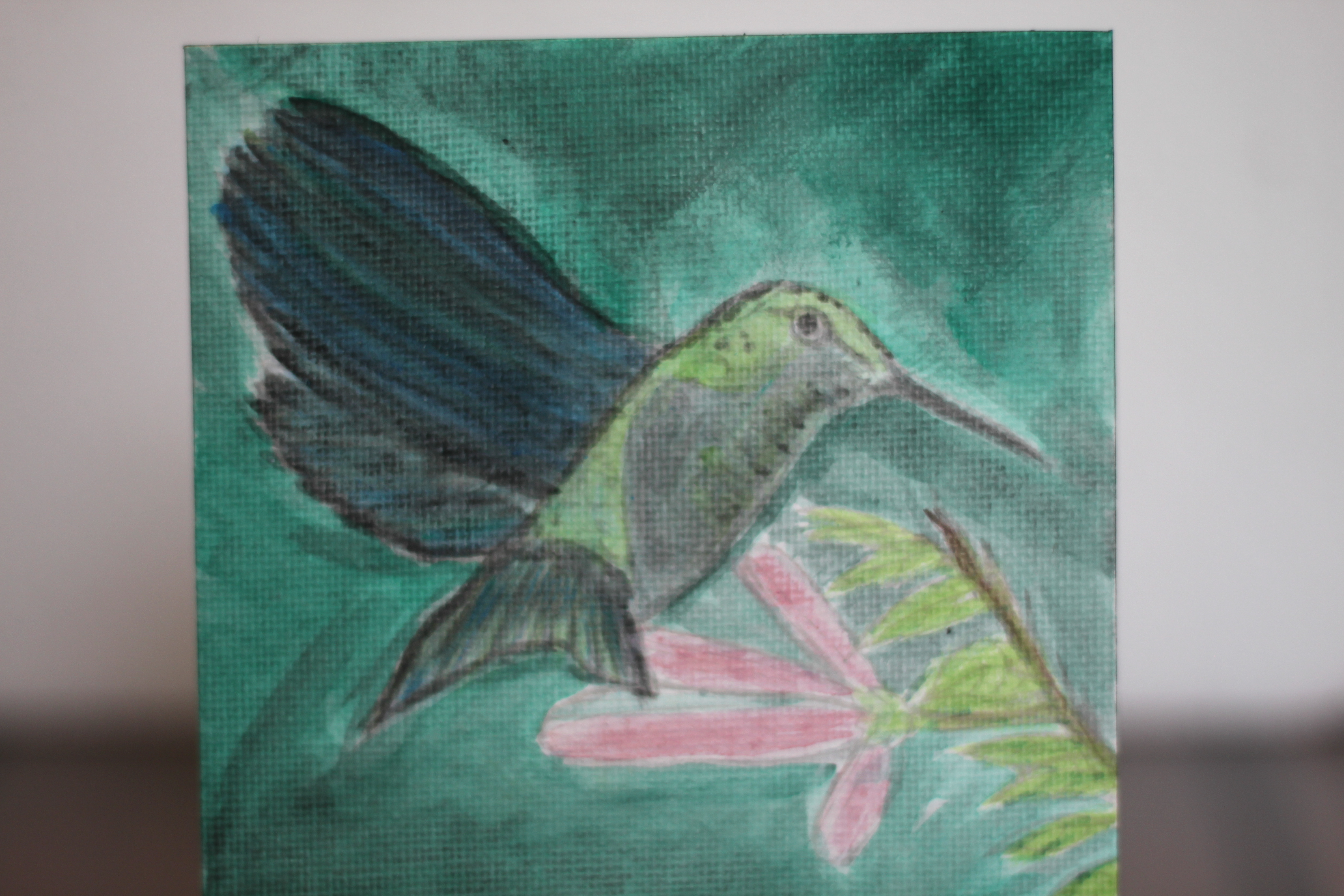Bird - Hummimgbird