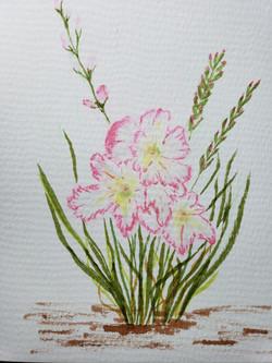 Pink Gladiols