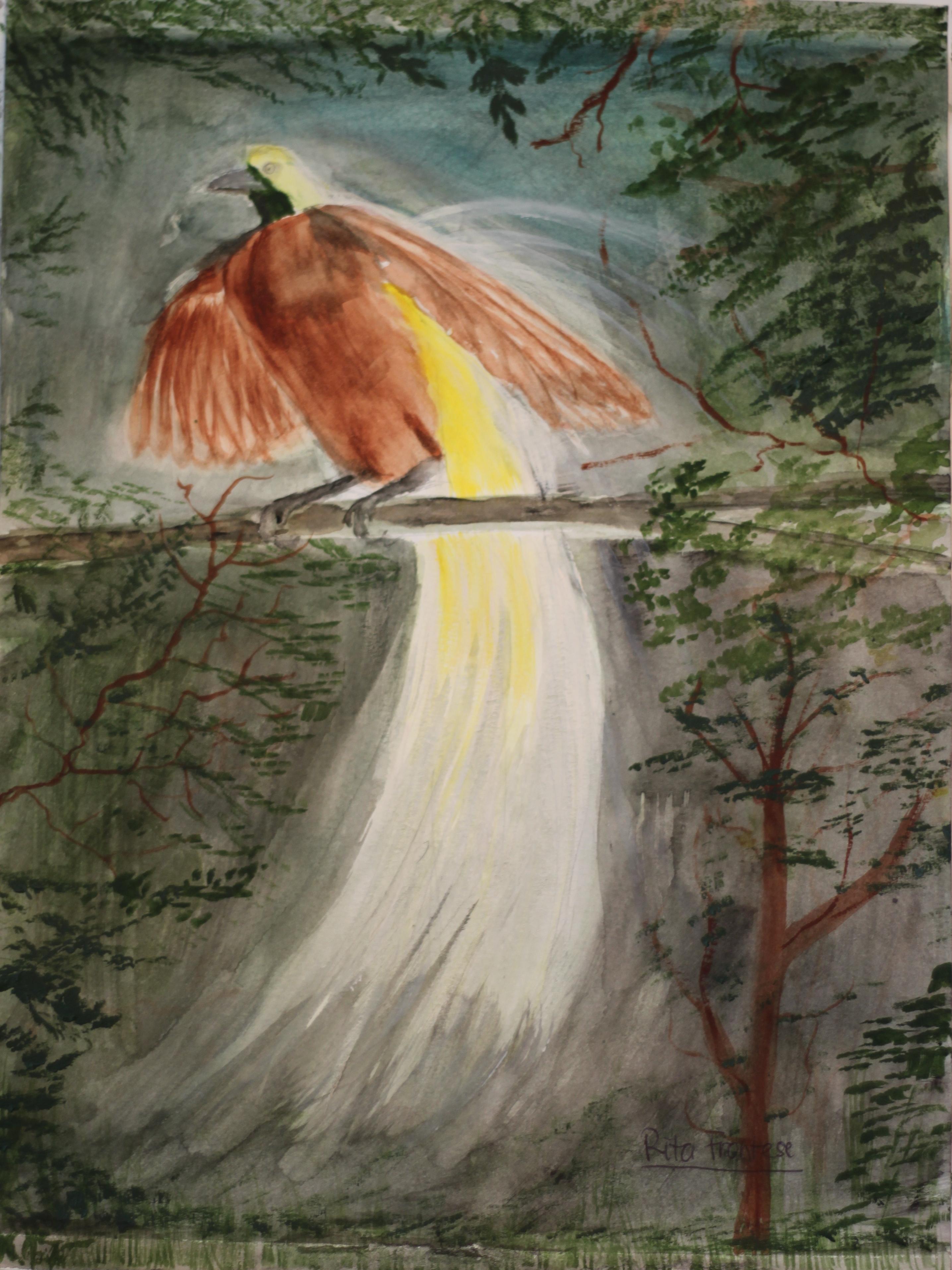 Cendrawasih (Bird of Paradise)