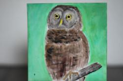 Bird - Owl