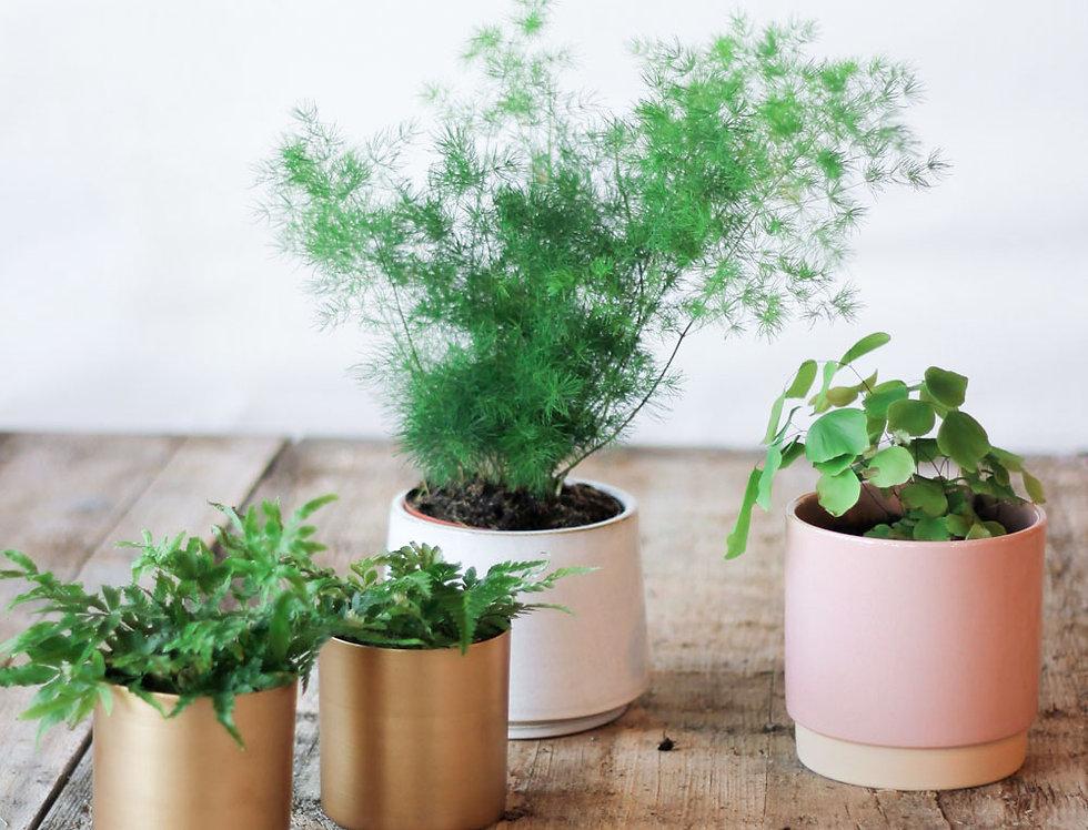 Potten bij plantpakket