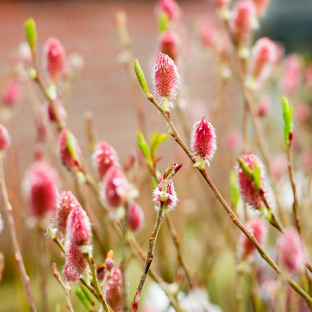 Januari - Tuinkalender