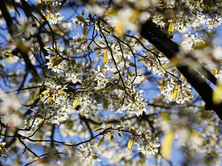 De tuin in — april