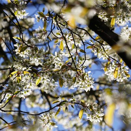 April - Tuinkalender