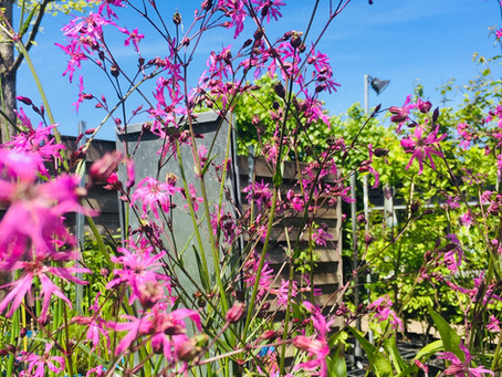 De tuin in — juni