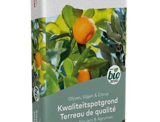 Olijven, vijgen en citrusgrond