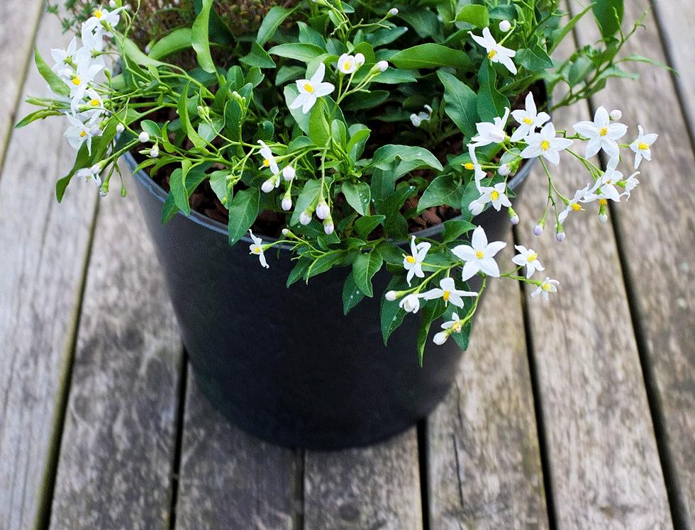 DIY bloempot - Tijm voor jezelf
