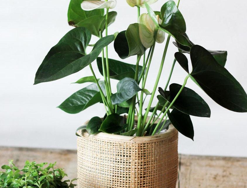 Plantpakket! Vensterbankfeest