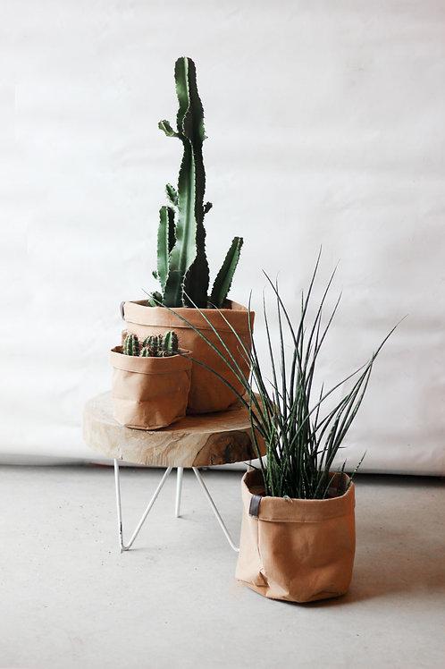 Plantpakket! Indoor woestijn