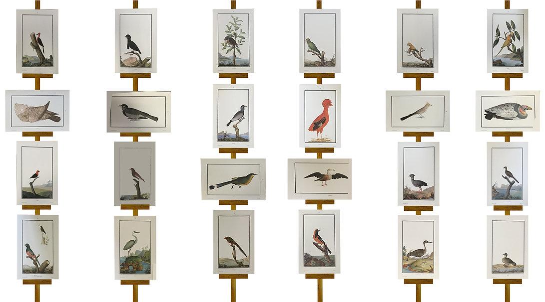 aves 2 - espaco.jpg