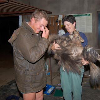 Martinus and Jane weighing brown hyena, Antony