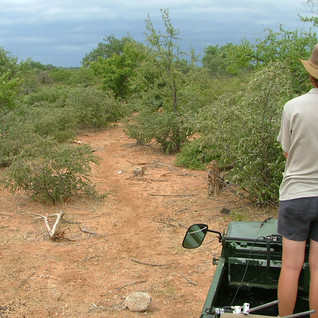 Bubbles and one cub. At this early stage Narinda stays in the Land Rover in case Bubbles gets protective and aggressive