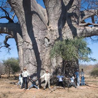 The Big Baobab