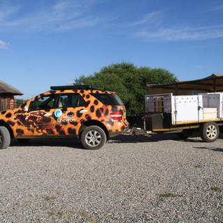 In the cool of the day, the cheetahs leave Makulu Makete for new homes. Goodbye, Bubbles and your cubs.  Kelly, please drive carefully - your cargo is very precious to us.