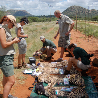 Blood samples are taken.  The cubs are given internal parasite treatment.  Luke changes Bubbles' collar.