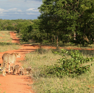 Our first sighting of the cubs