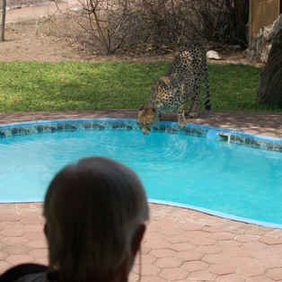 Phoenix at Lodge swimming pool