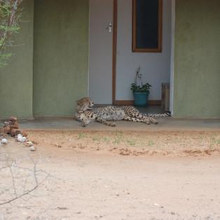 Phoenix at staff quarters, Lodge