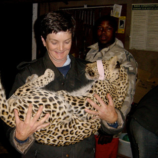 A sleeping leopard in my arms