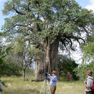 Thomas Pakenham photographs the Big Baobab for his book, The Remarkable Baobab