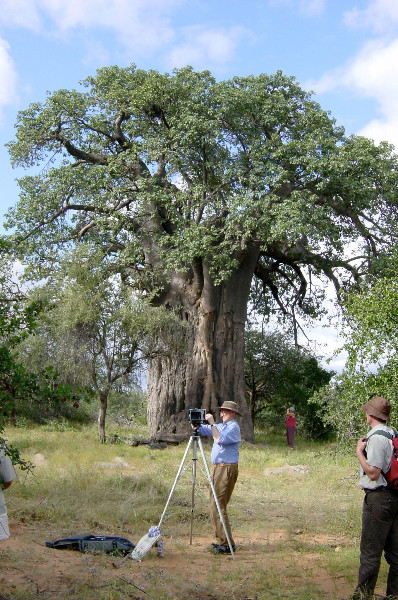 Thomas Pakenham photographs the Big Baobab for his book, The Remarkable Baobab