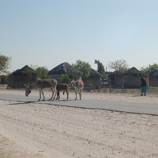 Typical Botswana village