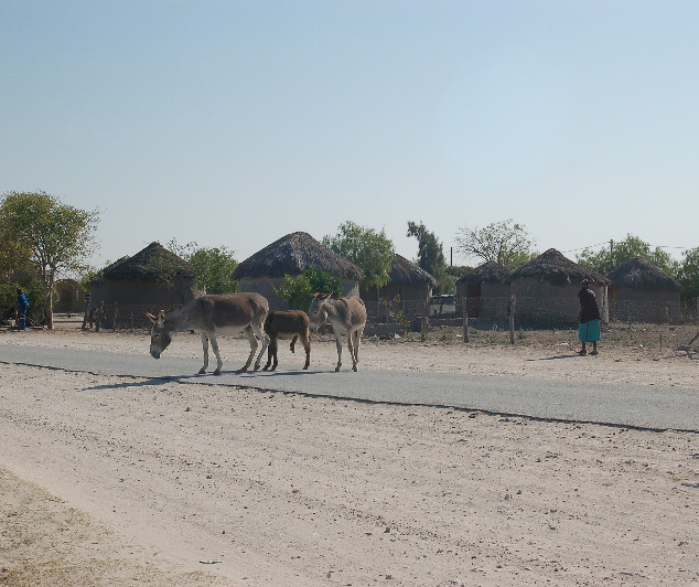 Typical Botswana village