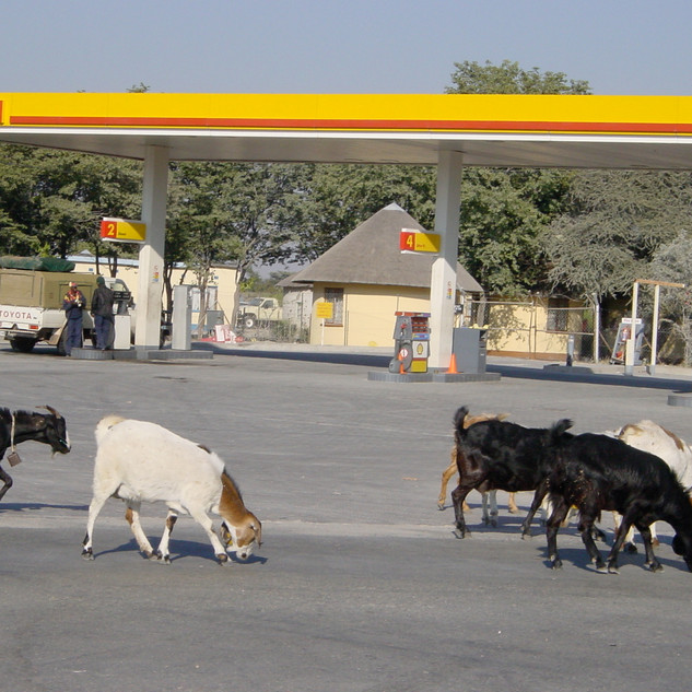 Shell Service Station, Nata