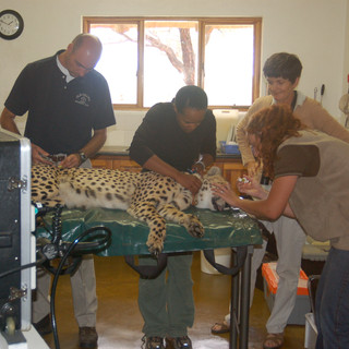 Scruff's gastroscopy in the Lodge kitchen - Dr. Caldwell, Bennie, Jane and Kelly