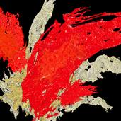 Red Splash #2