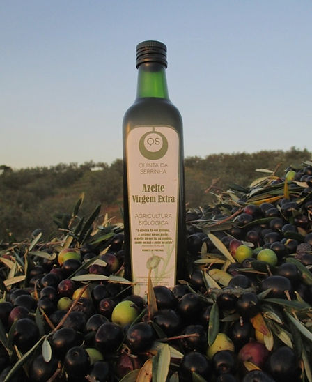 organic olive oil, small production