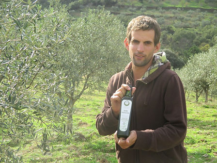 Organic olive oil producer,