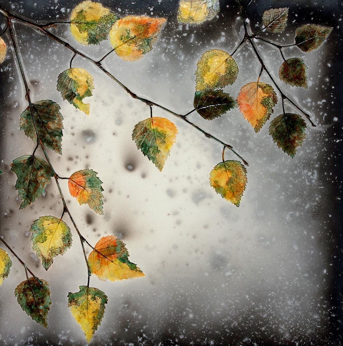 Autumn golden birch