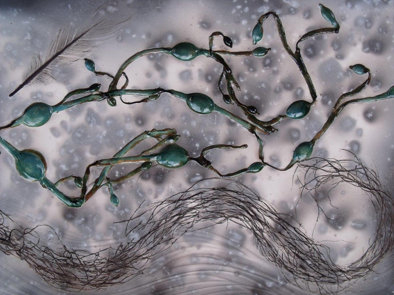 Seaweed I