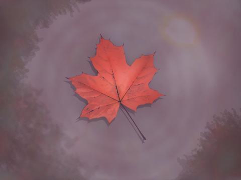 Autumn's Glorious Arrival