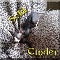 cinder 1b.jpg