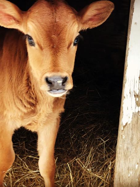 Heartfelt Raw Milk