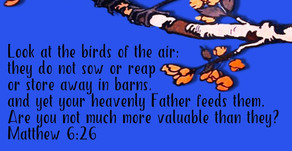 A Birdseed Blessing