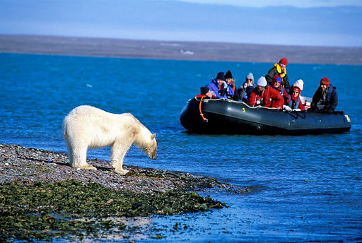 Arctic_cruise_Spitsbergen_Polar_Bear_vie
