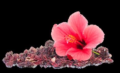 fleur hibiscus copie.png