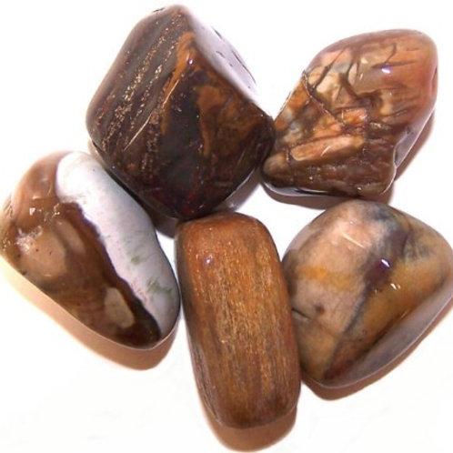 Petrified Wood Large Tumblestone