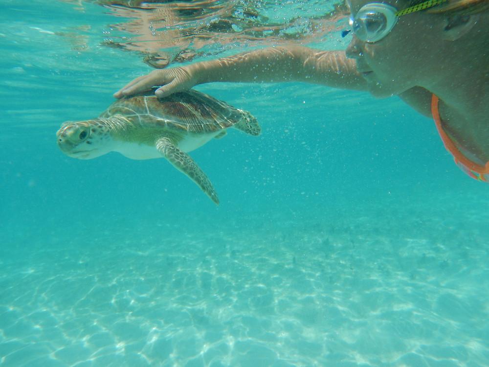 Turtle Love at Hoopers Bay