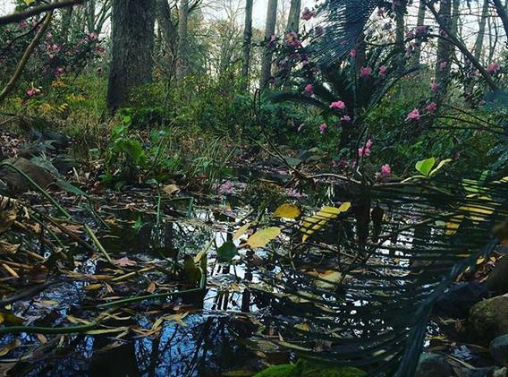 Louisiana Garden