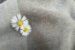 Natural Cotton fibres
