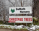 Horticultural sale for Scolue Spruce, White Pine, Nortch Pine, Cannan Fir, Fraiser Fin, Bway Spruce, cut trees, live trees, potted trees, wreaths, swags, you cut Christmas trees, pre cut Christmas trees, evergreens, conifers, tree stands, tree farm