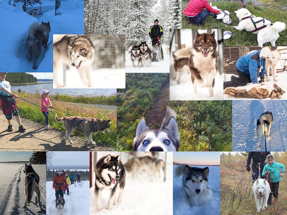 Hunde_Collage_2021.jpg
