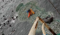 Peru Pesca