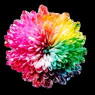 multicolored flower illustration_edited.