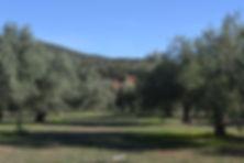 greek olive oil exports